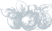 blue-berries-service-3