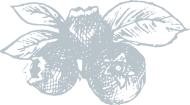 blue-berries-service